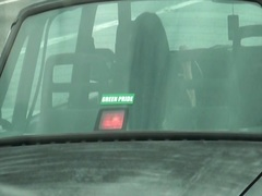 velký zadky, kočky, nahota na veřejnosti, v autě